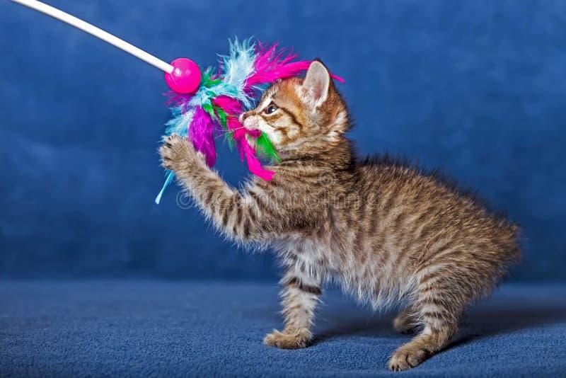 Gattino sveglio immagine stock libera da diritti