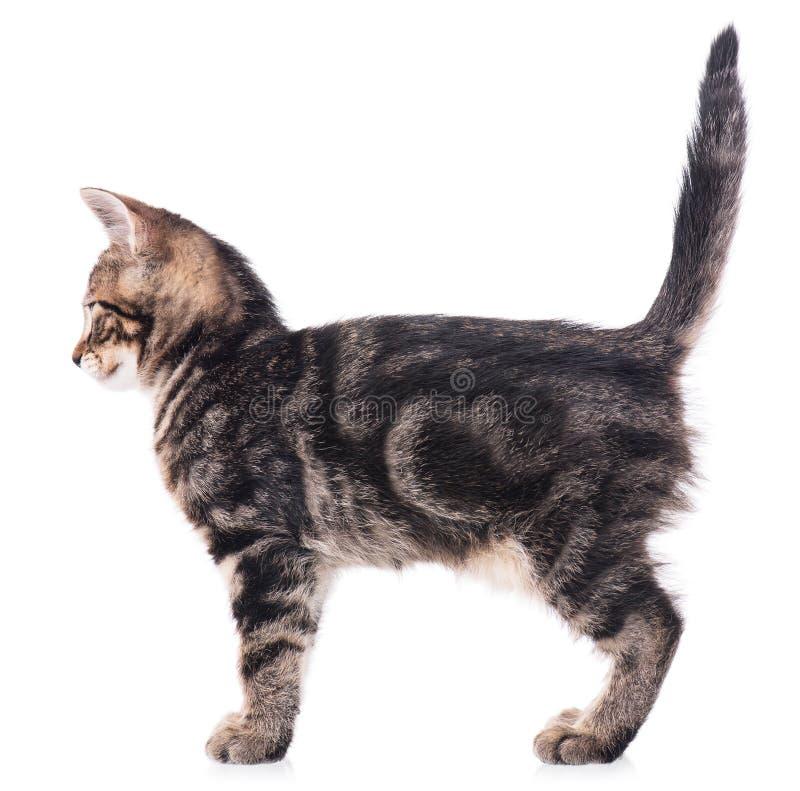 Download Gattino sveglio immagine stock. Immagine di gawk, mammifero - 56878811