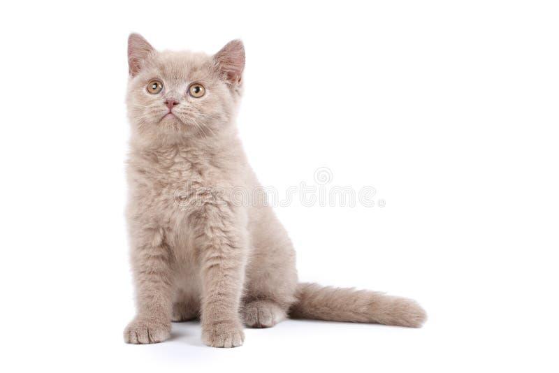 Gattino sveglio immagine stock