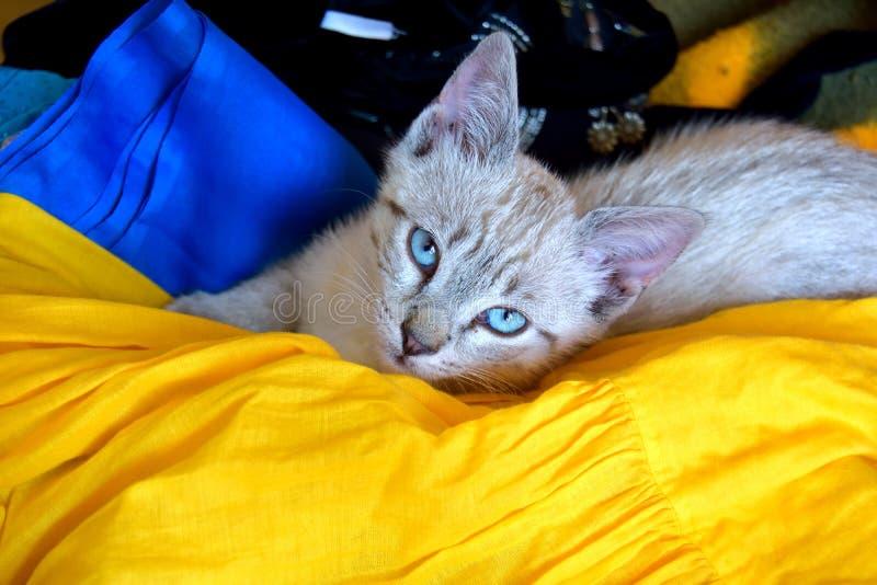 Gattino sveglio fotografia stock