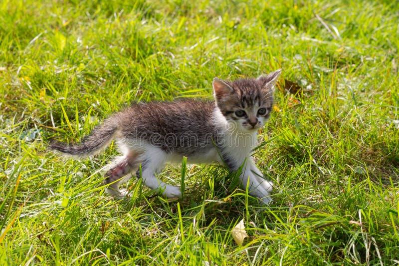 Gattino sveglio che gioca nel giardino immagini stock