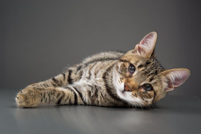 Gattino sveglio con la rappresentazione della terza palpebra (sporgenza della membrana nittiante) fotografia stock
