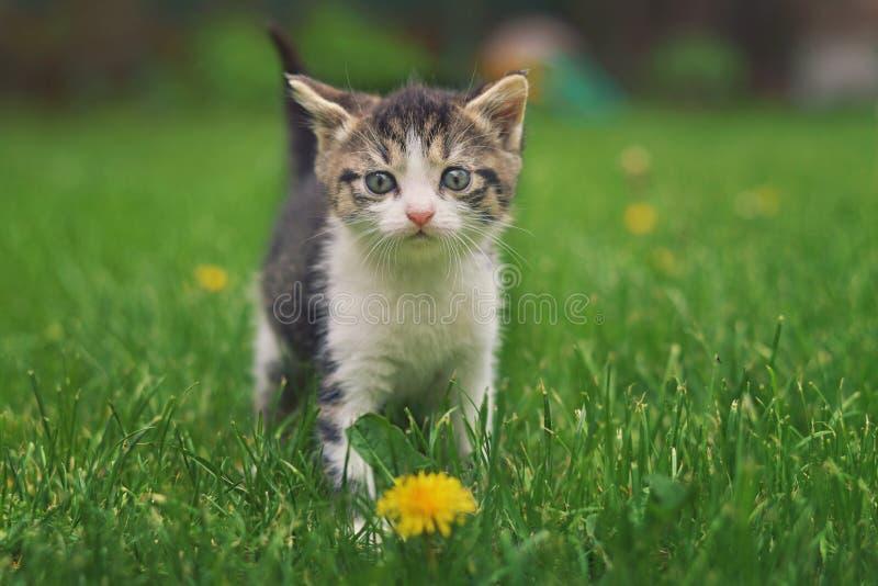 Gattino sveglio con un fiore fotografia stock libera da diritti