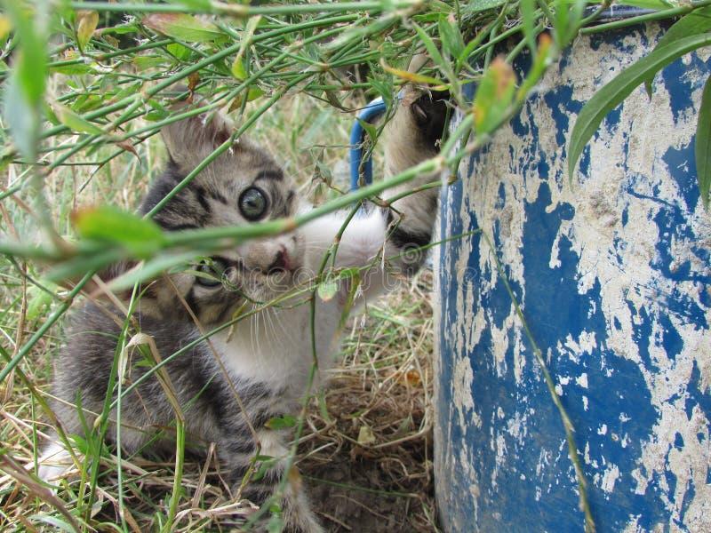 Gattino sveglio concentrato ad un grande vecchio vaso fotografia stock