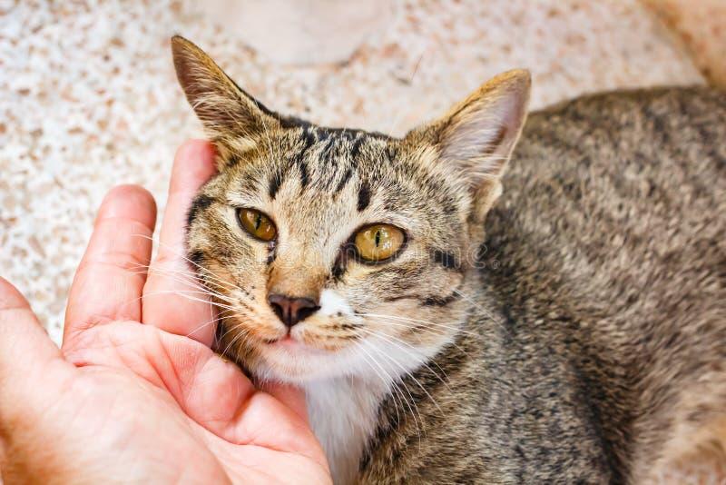 Gattino sveglio del soriano che si rilassa sulla tavola immagine stock libera da diritti
