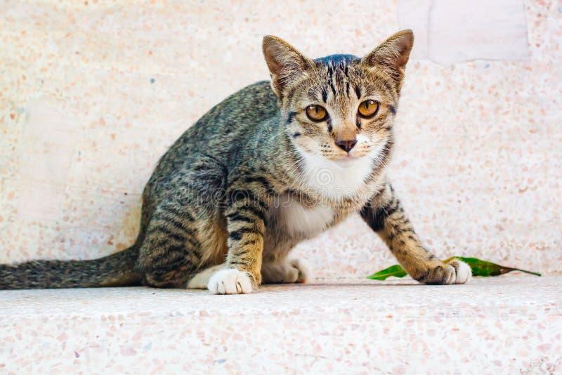 Gattino sveglio del soriano che si rilassa sulla tavola immagine stock