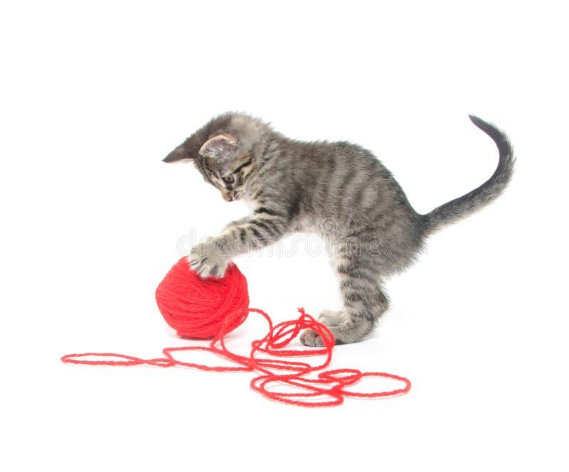 Gattino sveglio del tabby che gioca con il filato fotografie stock