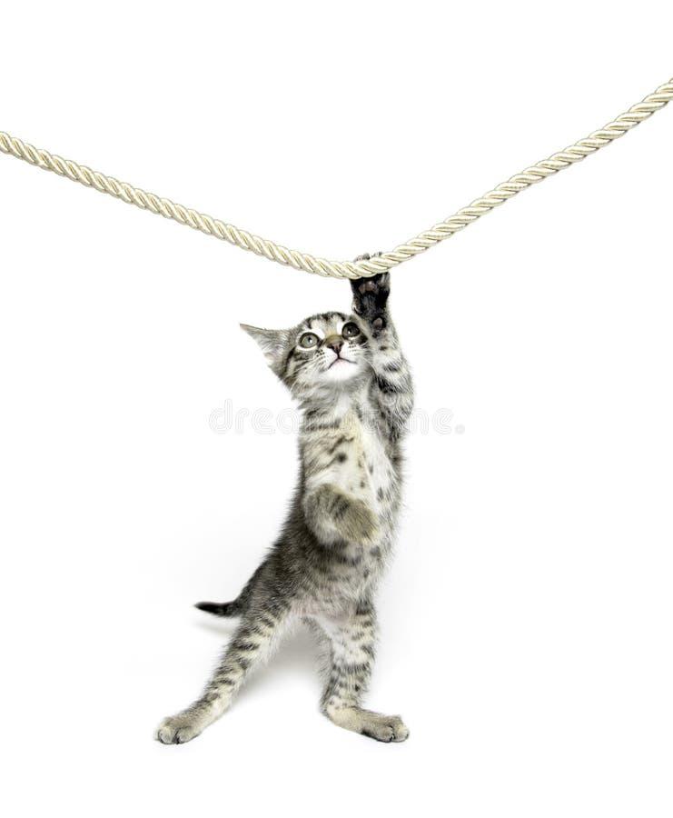Gattino sveglio del tabby che gioca con la corda fotografie stock libere da diritti