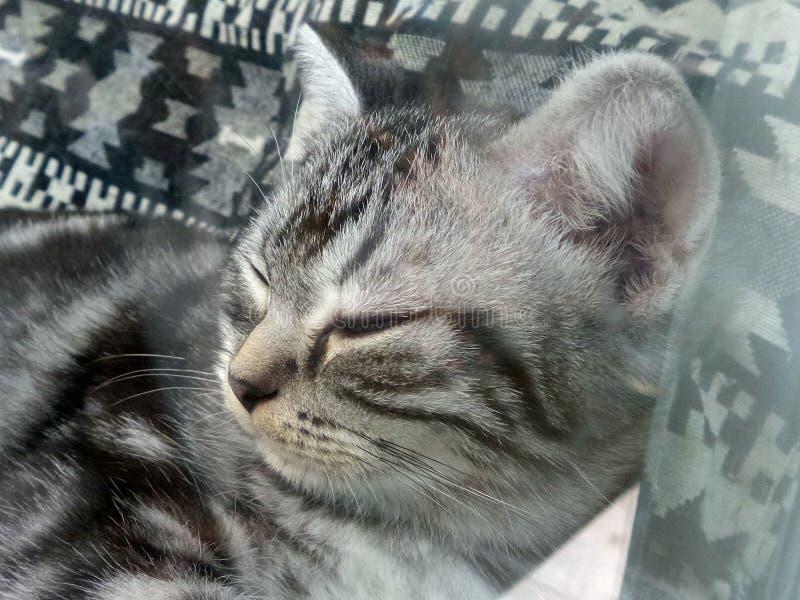 Gattino sveglio di sonno fotografia stock