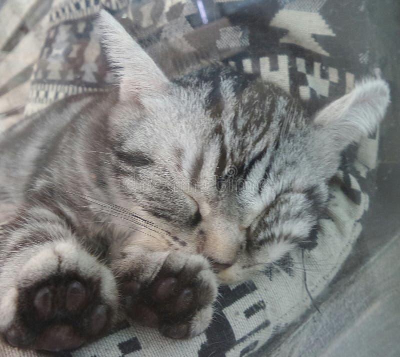 Gattino sveglio di sonno fotografia stock libera da diritti