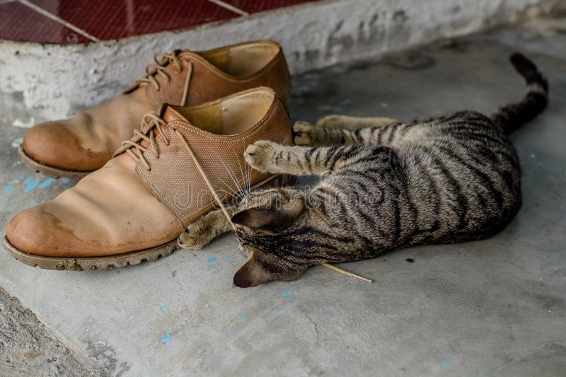 Gattino sveglio domestico che gioca con i laccetti fotografie stock