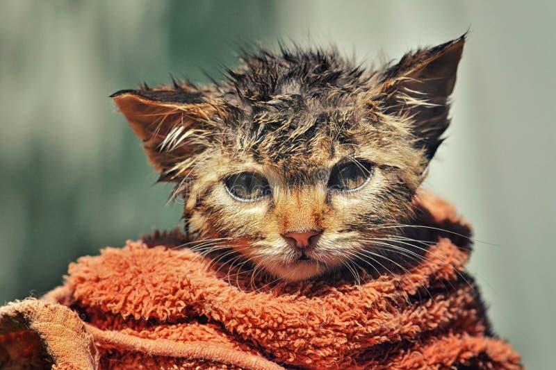 Gattino sveglio dopo un bagno immagini stock