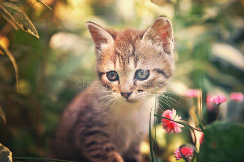 Gattino sveglio nei fiori fotografie stock libere da diritti