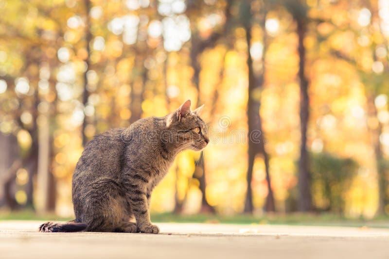 Gattino sveglio nel parco di autunno che gode di buon tempo fotografia stock
