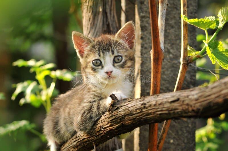Gattino sveglio nell'albero fotografia stock libera da diritti