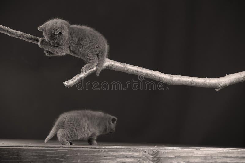 Gattino sveglio su su un ramo immagini stock libere da diritti