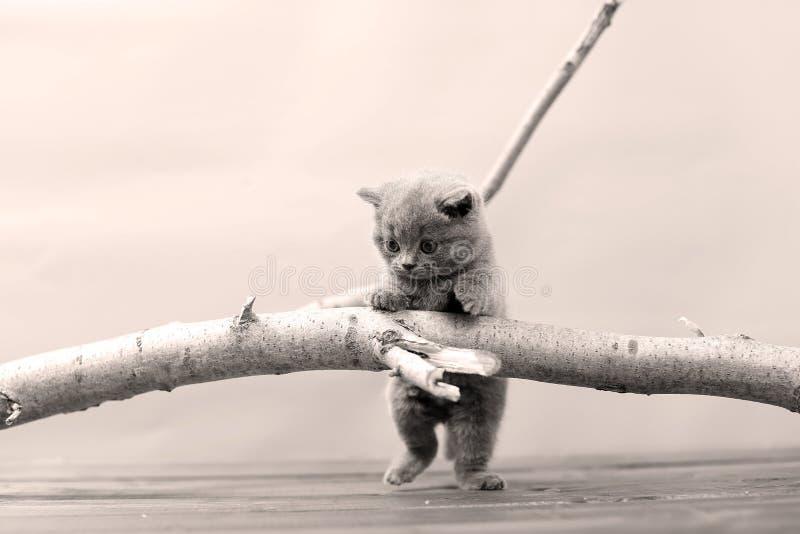 Gattino sveglio su su un ramo immagine stock libera da diritti
