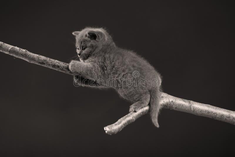 Gattino sveglio su su un ramo, fotografie stock libere da diritti