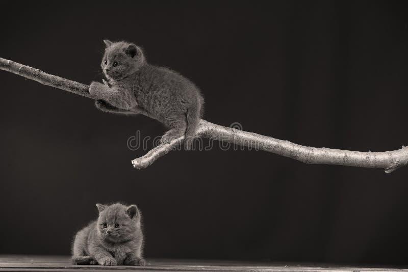 Gattino sveglio su su un ramo, fotografia stock