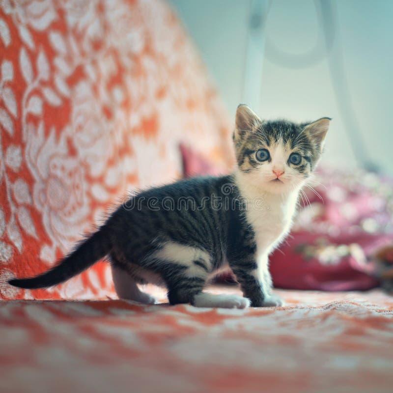 Gattino sveglio sul letto fotografia stock libera da diritti