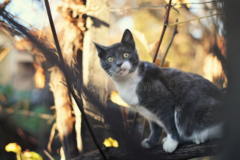 Gattino sveglio in un albero fotografia stock