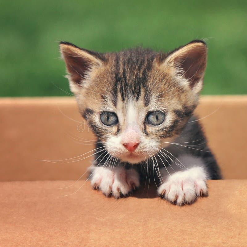 Gattino sveglio in una casella fotografie stock libere da diritti
