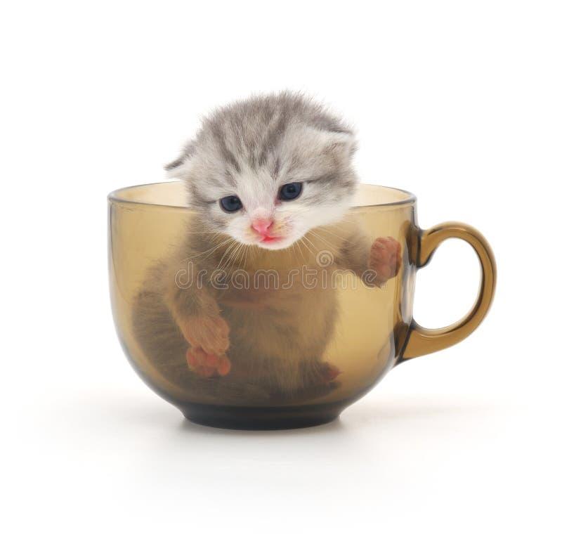 Gattino in tazza immagini stock