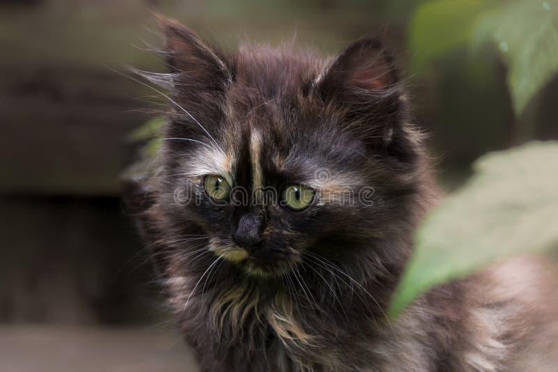 Gattino tenero fotografia stock