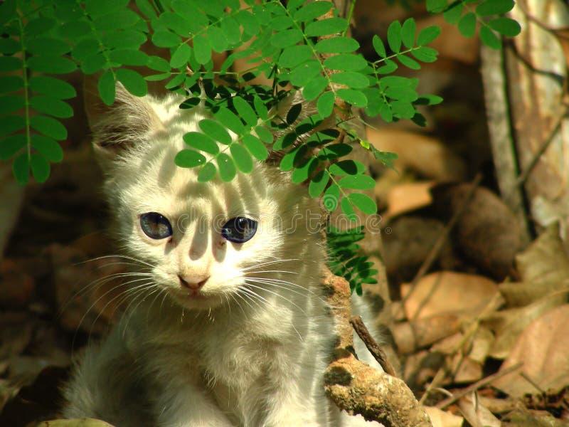 Gattino timido fotografia stock