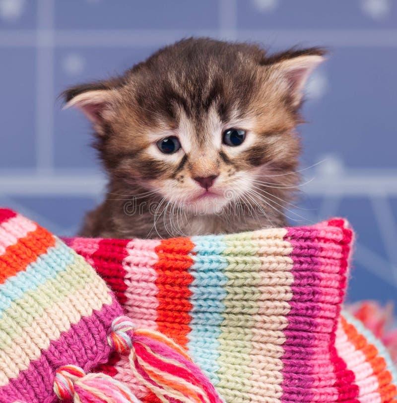 Gattino triste fotografia stock