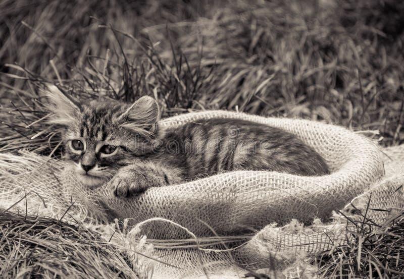 Gattino triste Gattino in un canestro Gatto lanuginoso monocromatico immagini stock
