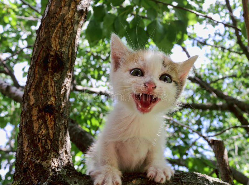 Gattino in un albero fotografia stock libera da diritti