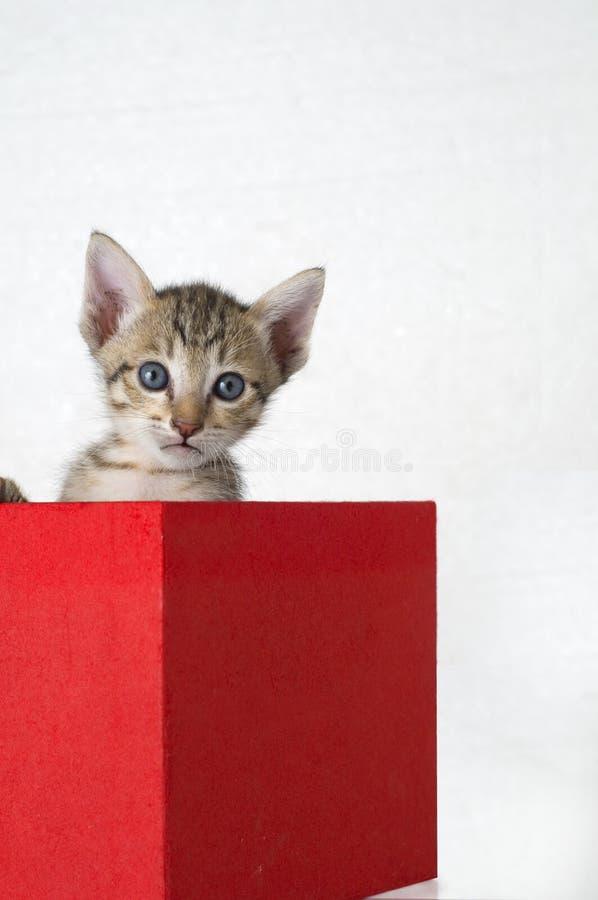 Gattino in una casella fotografia stock libera da diritti