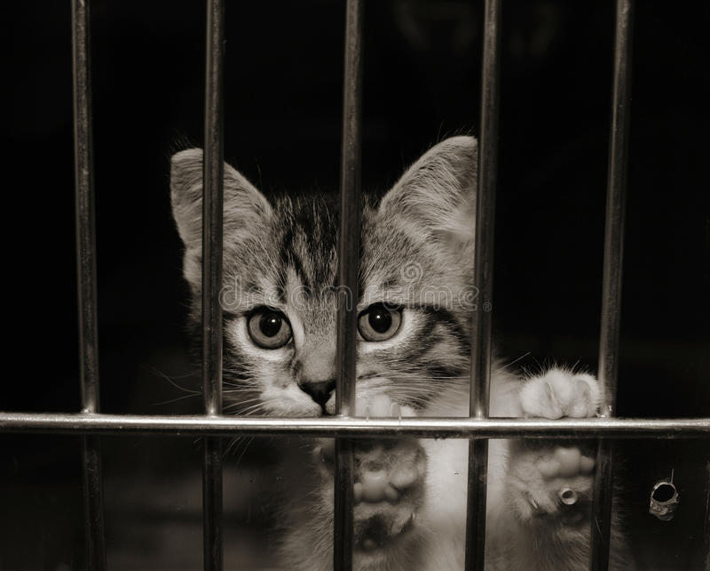 Gattino in una gabbia immagine stock libera da diritti