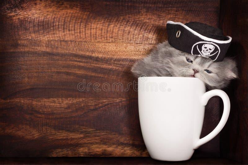 Gattino in una tazza fotografia stock