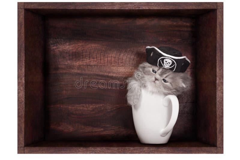 Gattino in una tazza fotografia stock libera da diritti