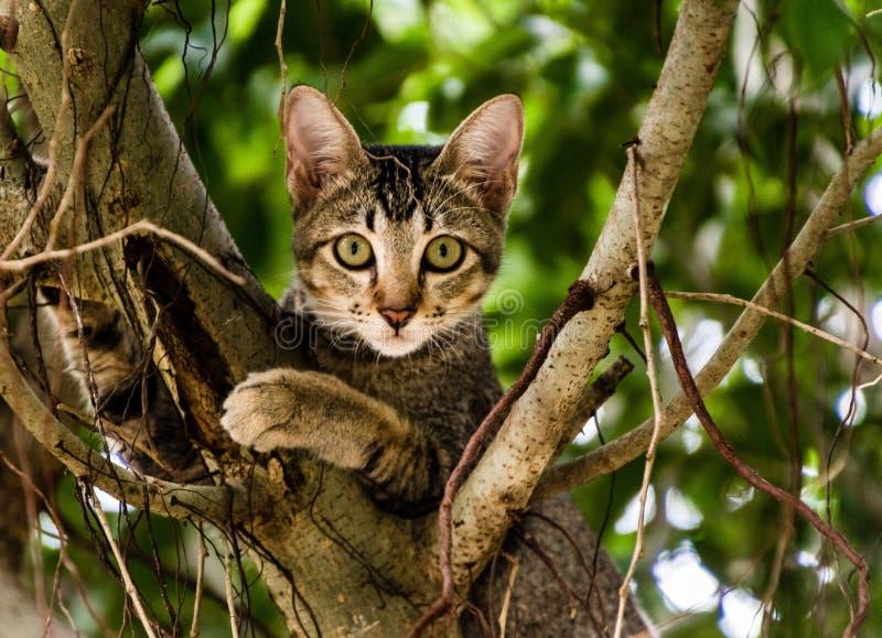 Gattino vietnamita che si siede su un albero fotografia stock libera da diritti