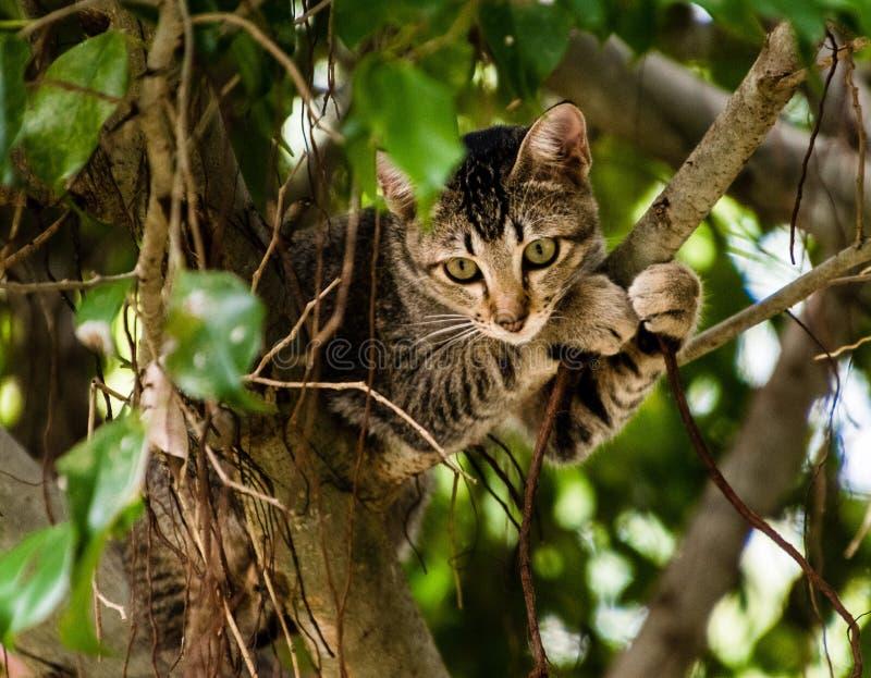 Gattino vietnamita che si siede su un albero fotografie stock libere da diritti