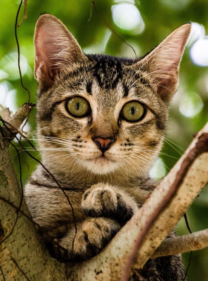 Gattino vietnamita che si siede su un albero immagini stock libere da diritti
