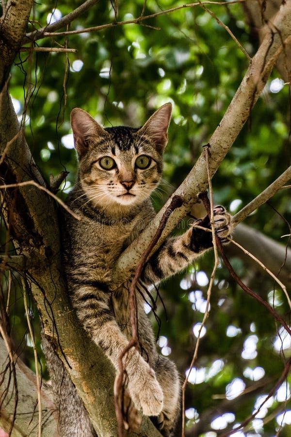 Gattino vietnamita che si siede su un albero fotografia stock