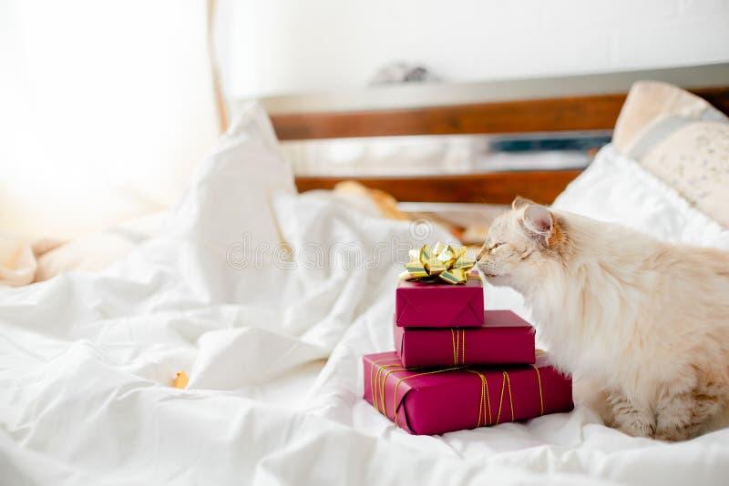Gattino volante con regali, inchini e nastri Vista orizzontale superiore spazio di lavoro concettuale per il Natale e il Capodann fotografia stock libera da diritti
