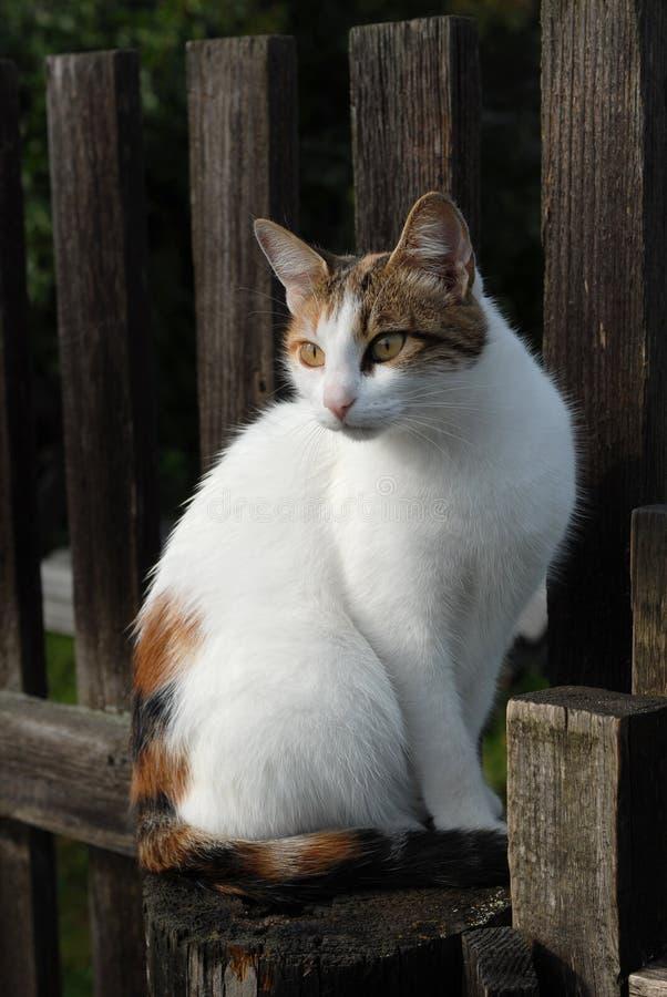 gatto fotografie stock libere da diritti