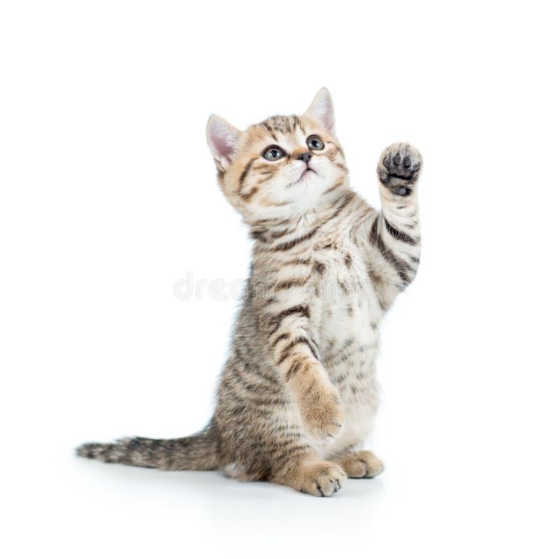 Gatto allegro del gattino fotografie stock