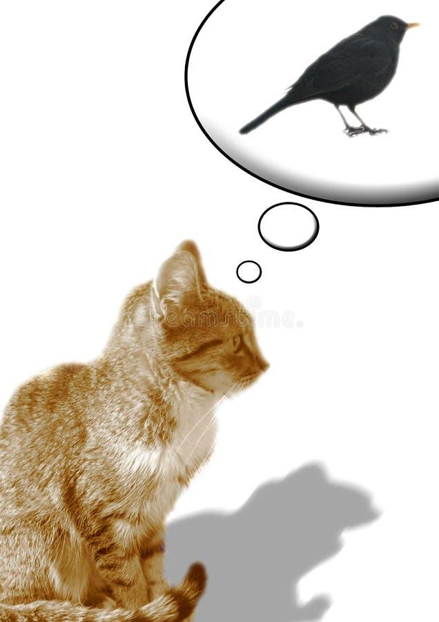 Gatto & uccello nero fotografia stock libera da diritti