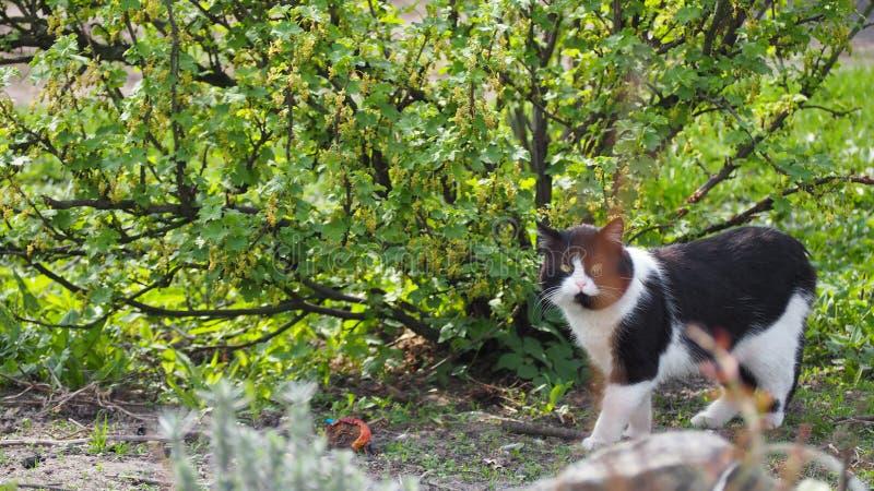 Gatto, animale, occhi in bianco e nero e verdi, natura, verde fotografia stock