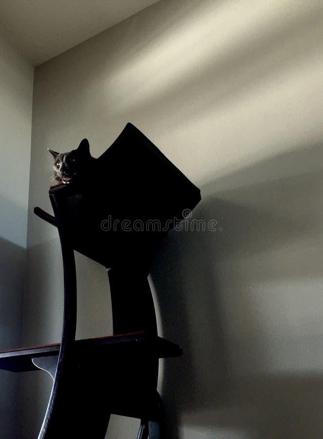 Gatto appollaiato sull'albero del gatto immagine stock libera da diritti