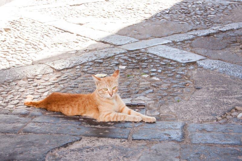 Gatto arancio che riposa su una via, Catania, Sicilia immagine stock libera da diritti