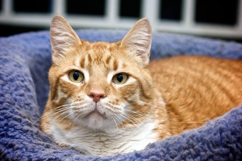 Gatto arancione in base fotografia stock libera da diritti