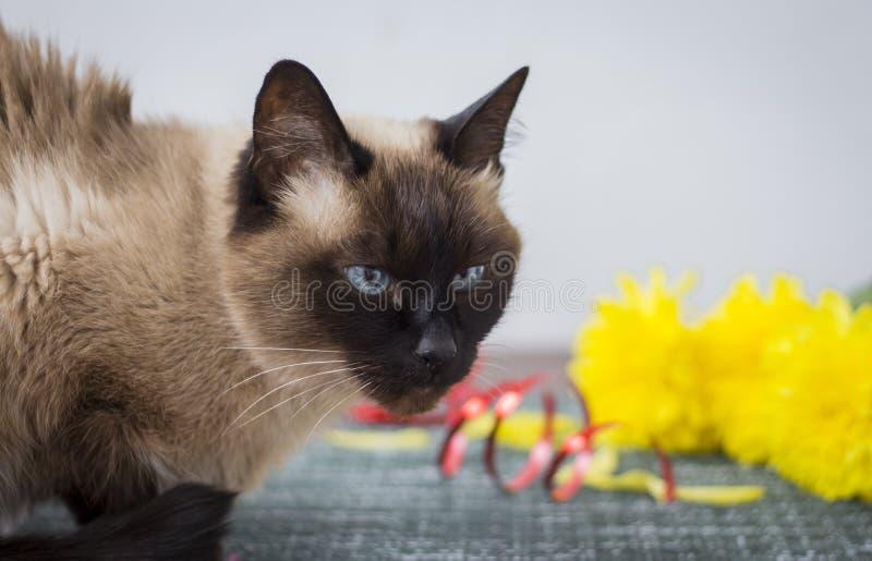 Gatto arrabbiato che si siede sulla tavola sui precedenti di un mazzo dei fiori fotografia stock libera da diritti