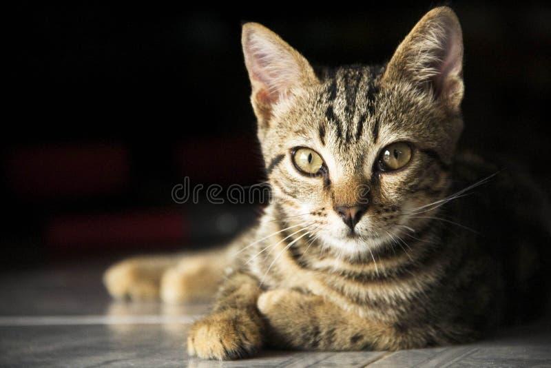 Gatto astuto fotografie stock